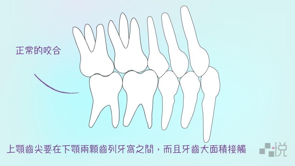 兩排牙齒互相嵌合的圖畫
